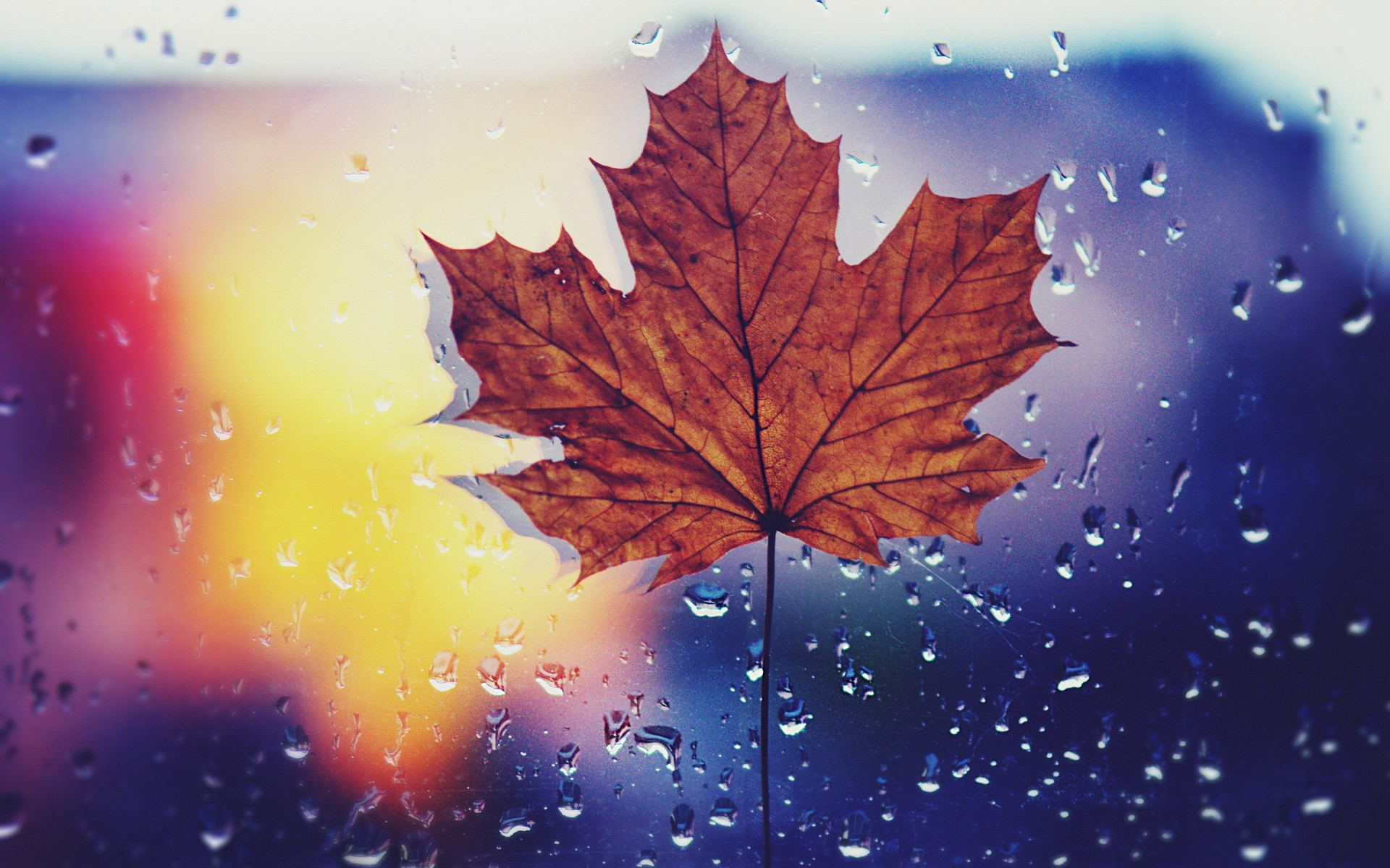 Fall Leaves Hd Mobile Wallpaper Dried Maple Leaf Wallpapers Dried Maple Leaf Stock Photos