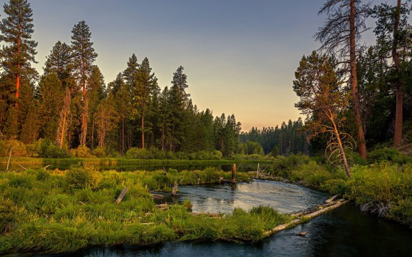 forest calm river wood grass wallpapers