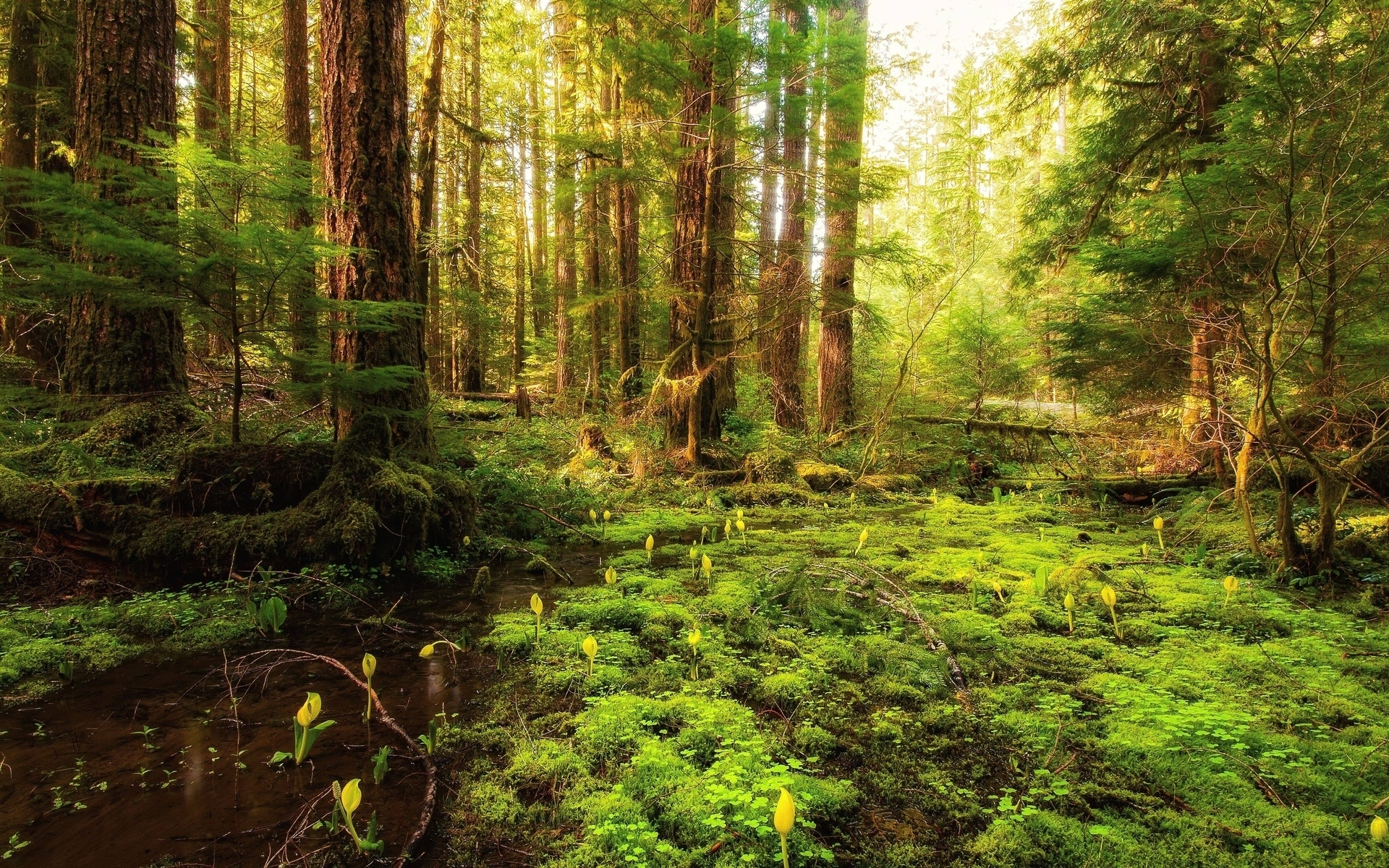 Forest Animated Wallpaper Forest Plants Water Sunny Wallpapers Forest Plants Water
