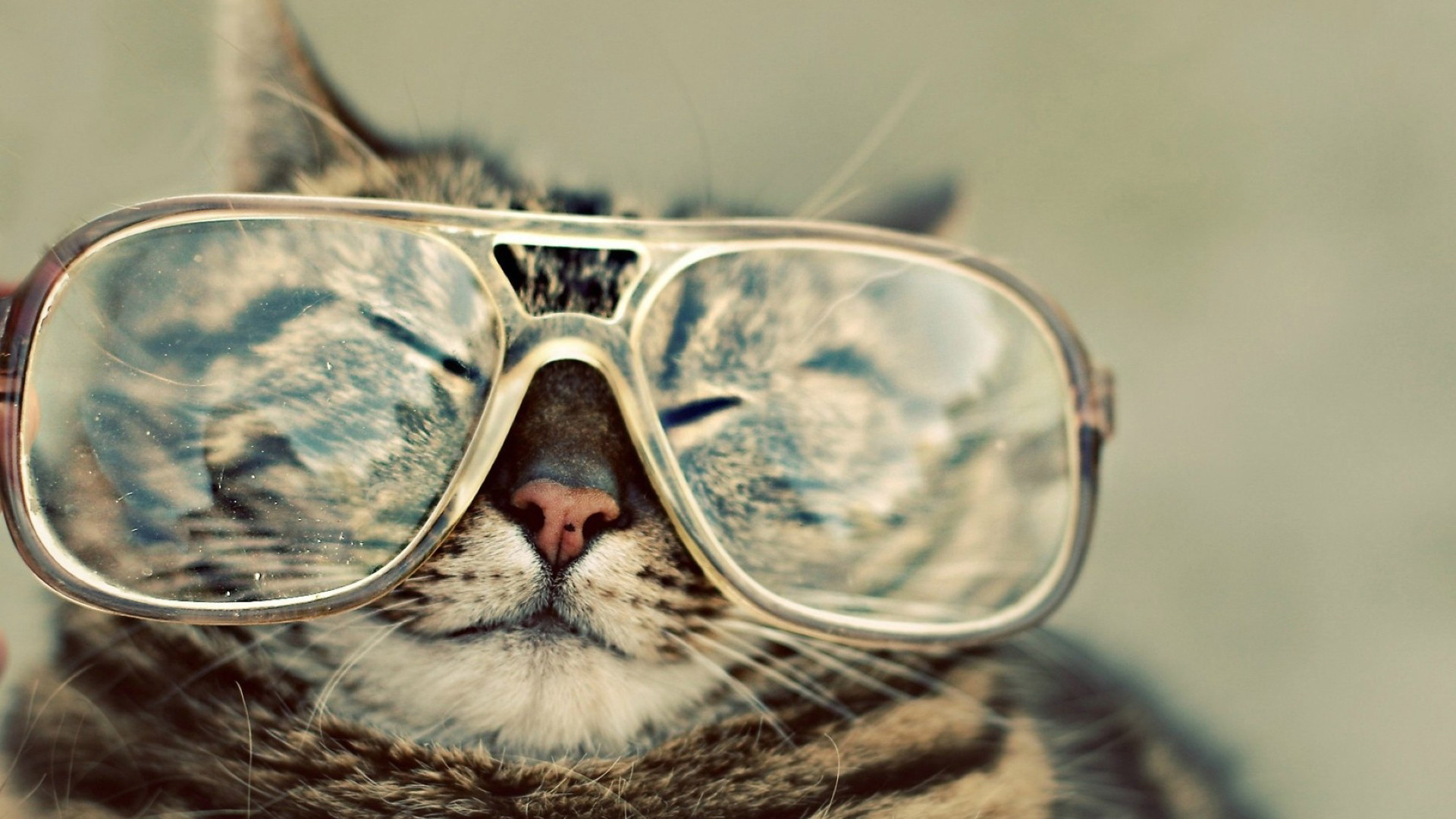 funny cat wallpapers   funny cat stock photos