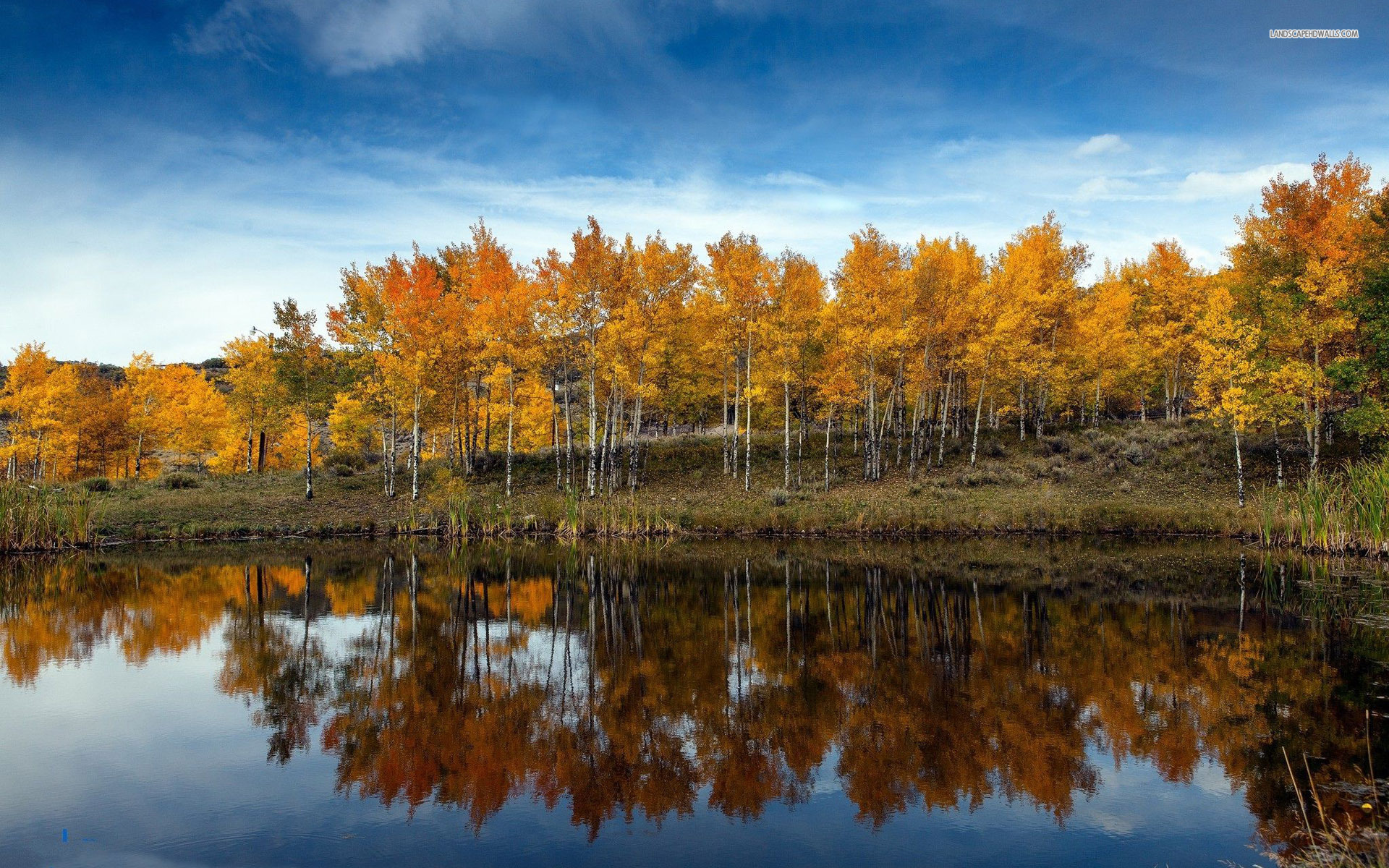 Animated Wallpaper For Tablet Golden Autumn Forest Reflect Wallpapers Golden Autumn