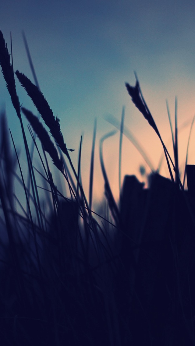 Cute Wallpaper Images For Desktop 640x1136 Grass At Sunset Iphone 5 Wallpaper