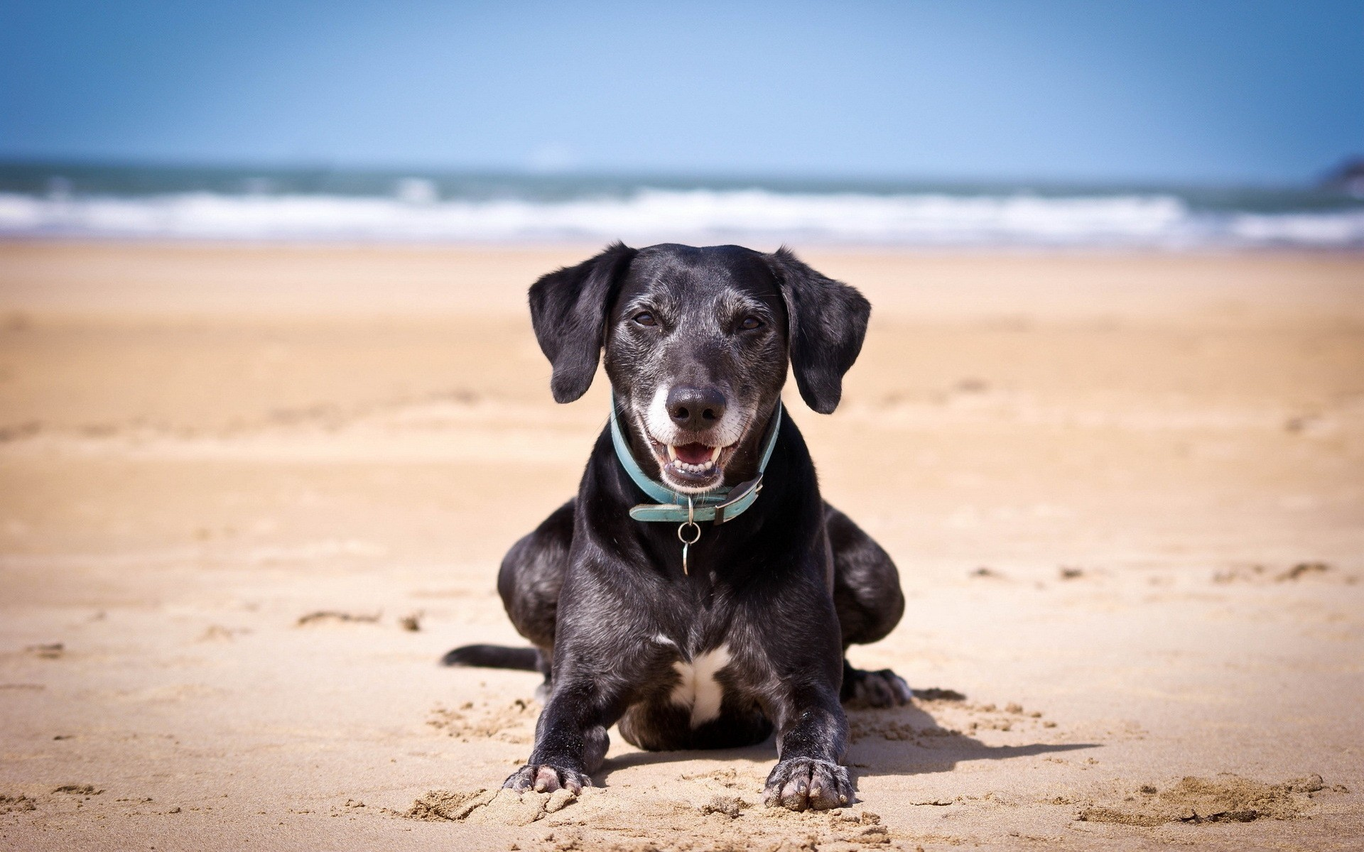 Iphone X Sand Wallpaper Happy Dogt By The Sea Wallpapers Happy Dogt By The Sea