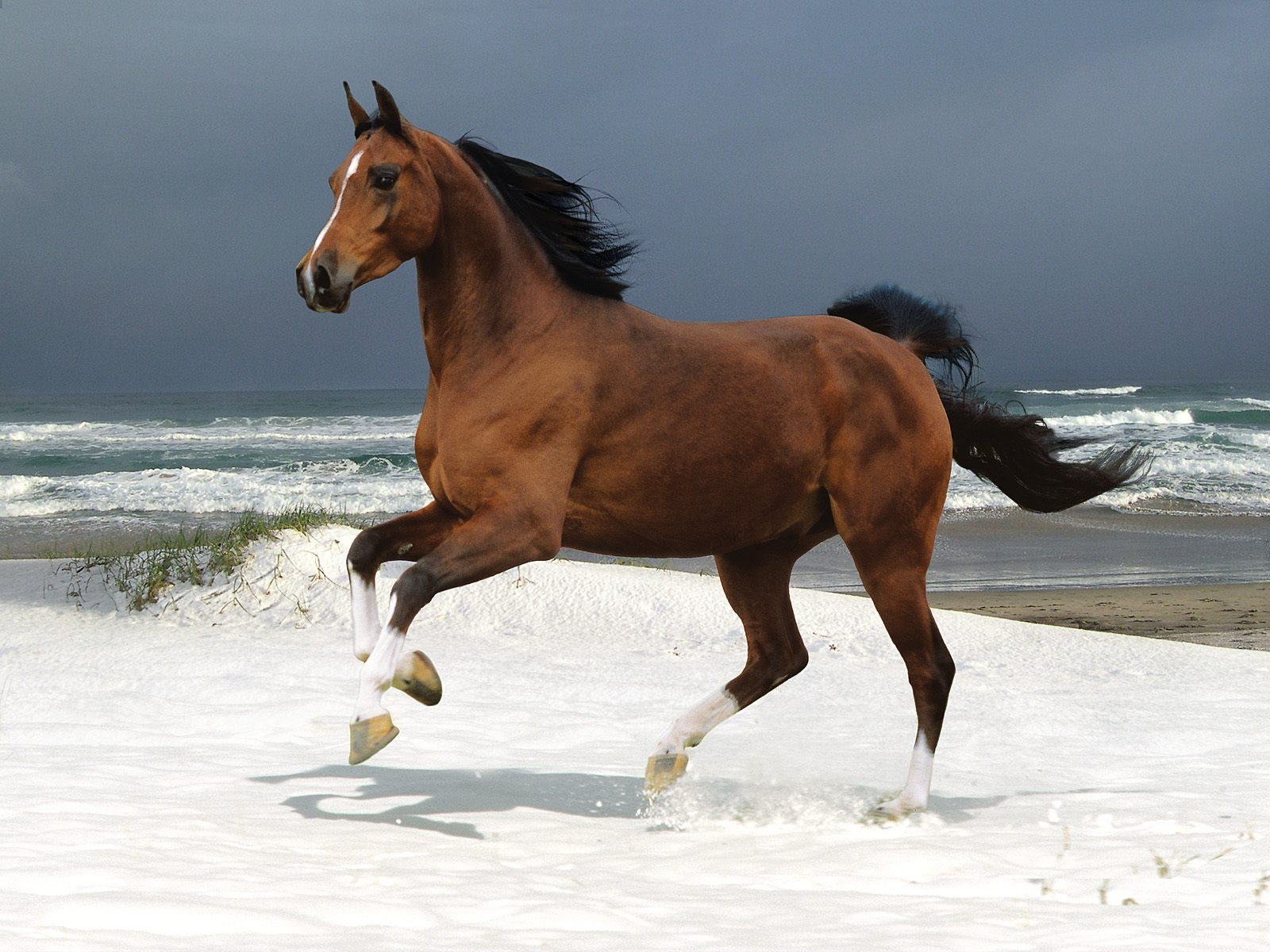 1600x1200 Horse on white snow desktop wallpapers and stock photos
