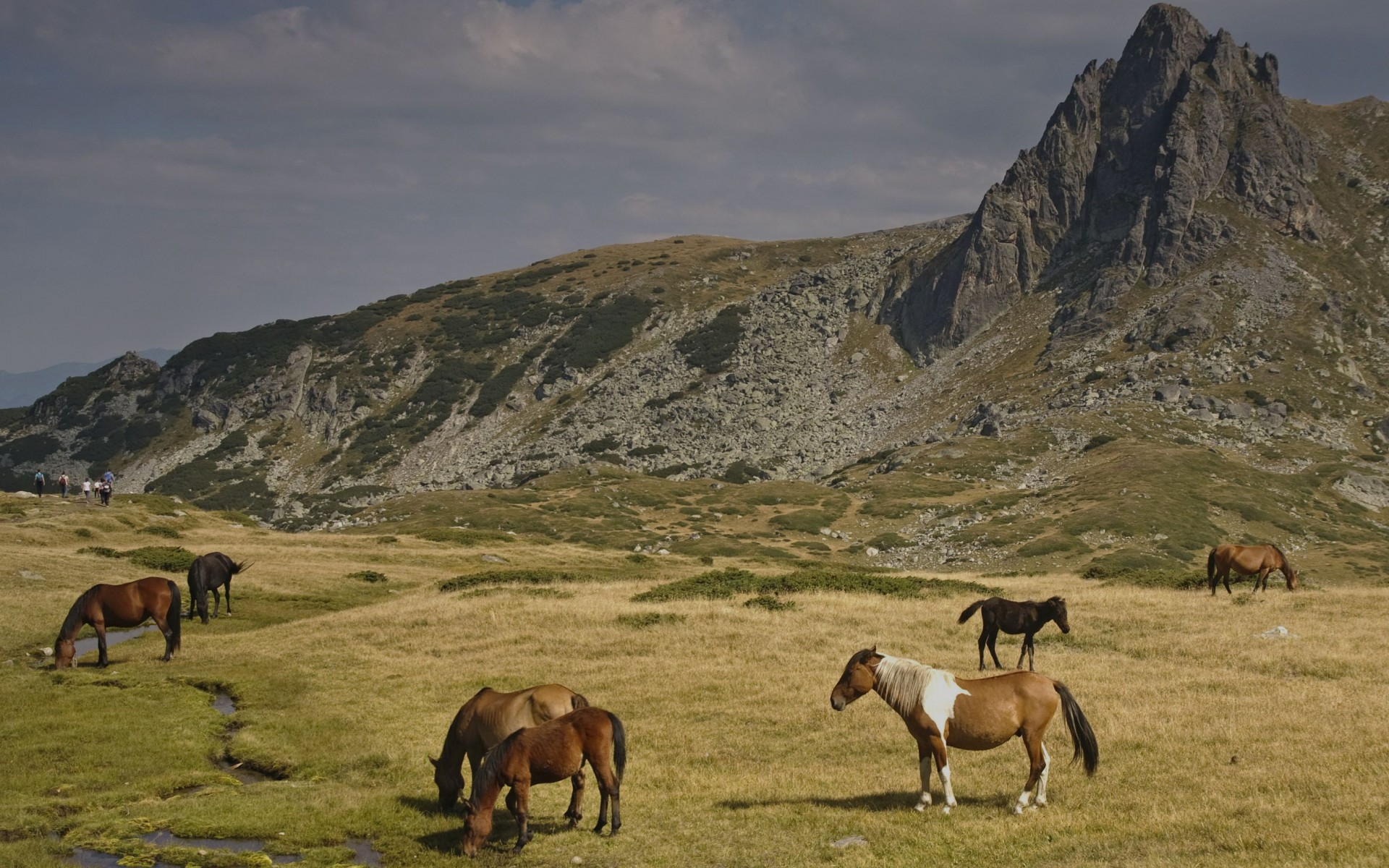 Animated Jungle Wallpaper Horses Rila Mountains Bulgaria Wallpapers Horses Rila