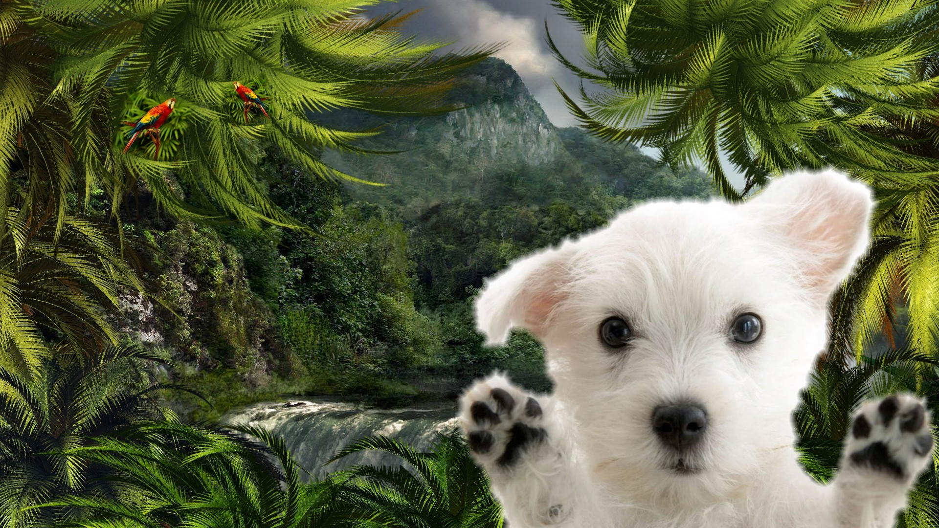 Animated Jungle Wallpaper Lost Puppy Wallpapers Lost Puppy Stock Photos