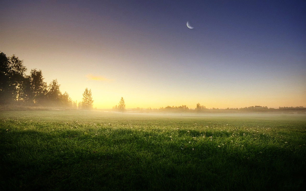 Meadow Trees Morning Foggy wallpapers | Meadow Trees ...