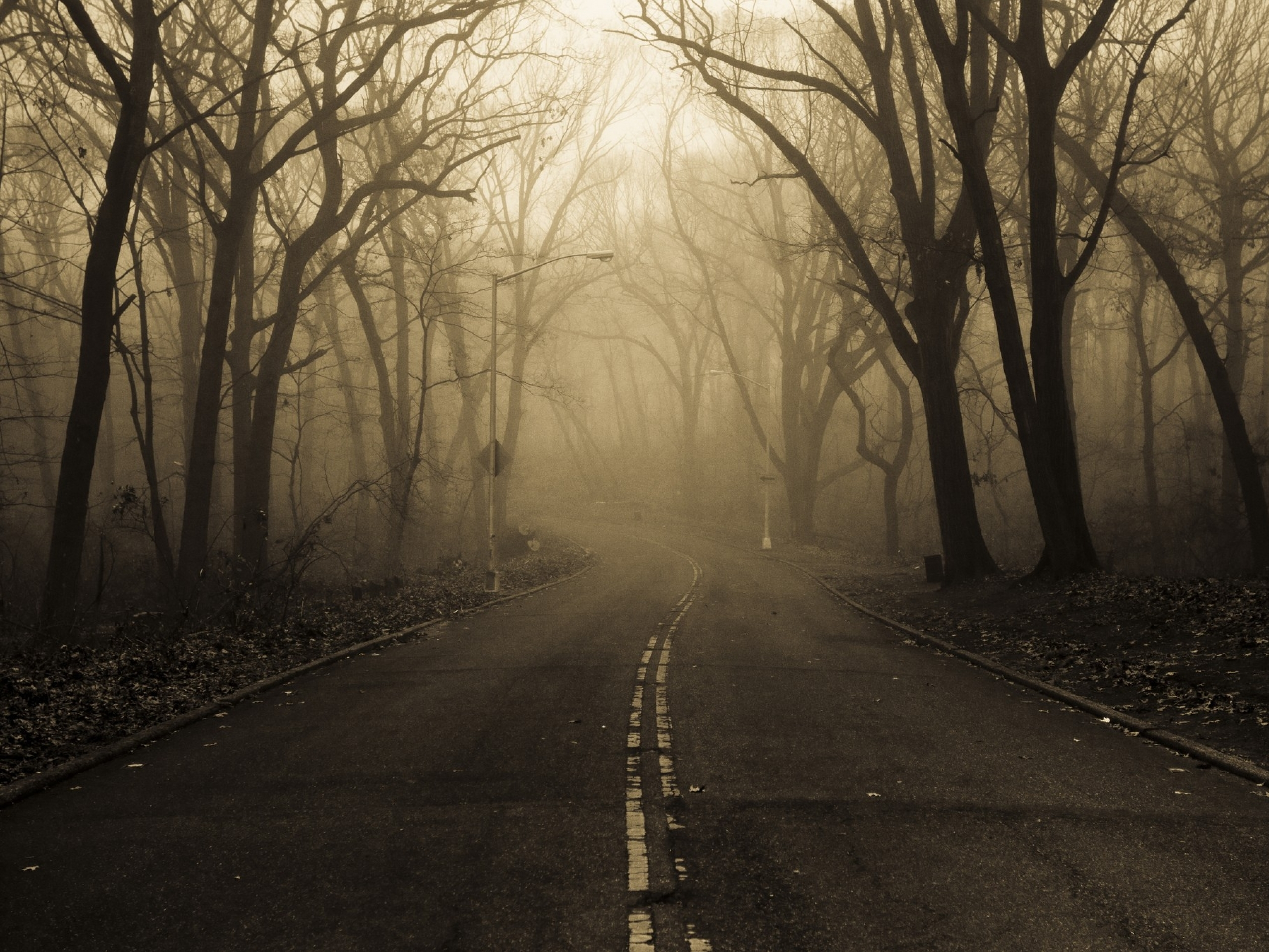 Creepy Fall Wallpaper Mysterious Forest Fog Amp Street Wallpapers Mysterious