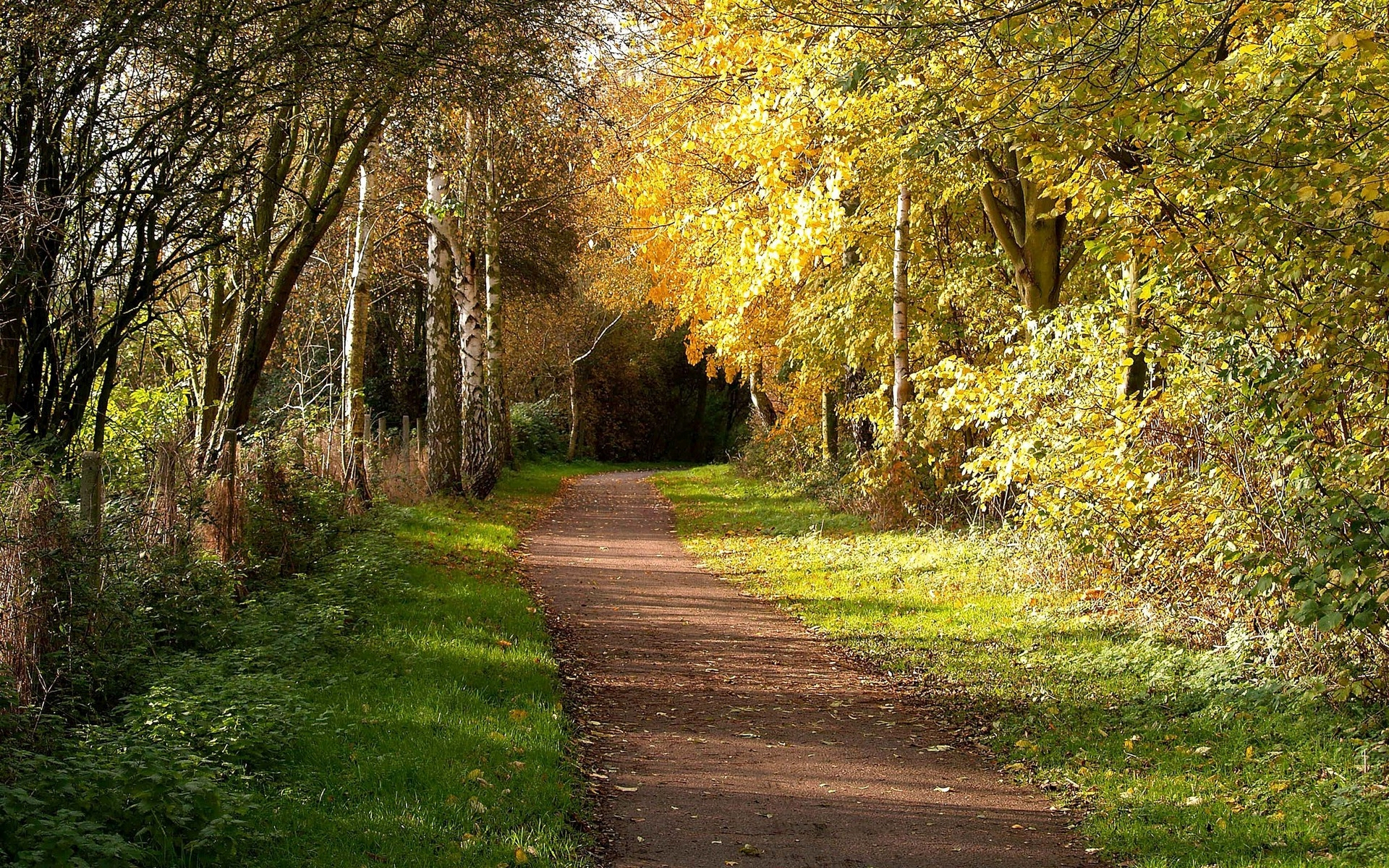 Forest Animated Wallpaper Mysterious Forest Path Grass Wallpapers Mysterious