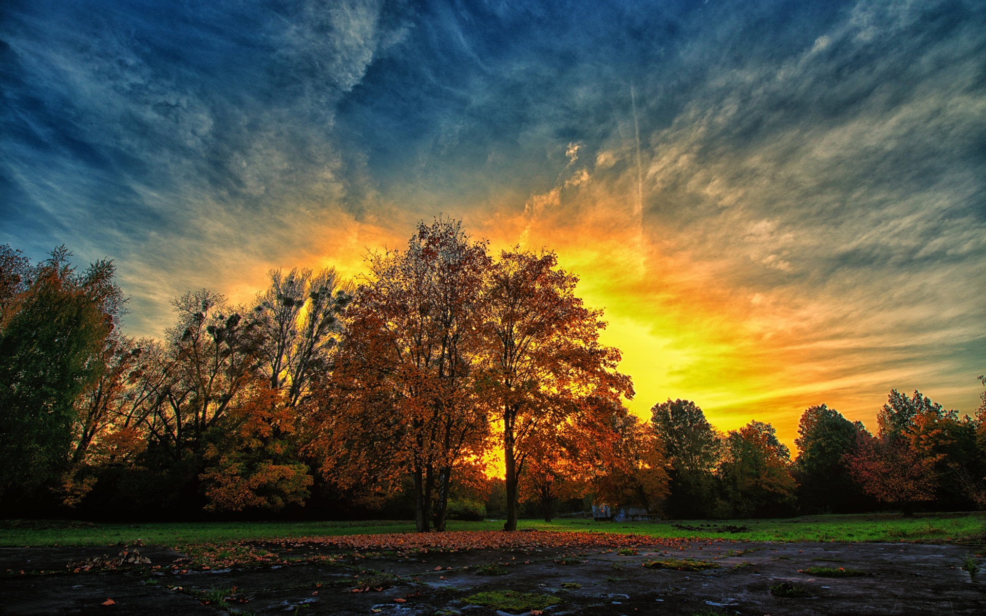 Autumn Tree Leaf Fall Animated Wallpaper Perfect Autumn Sunset Amp Trees Wallpapers Perfect Autumn