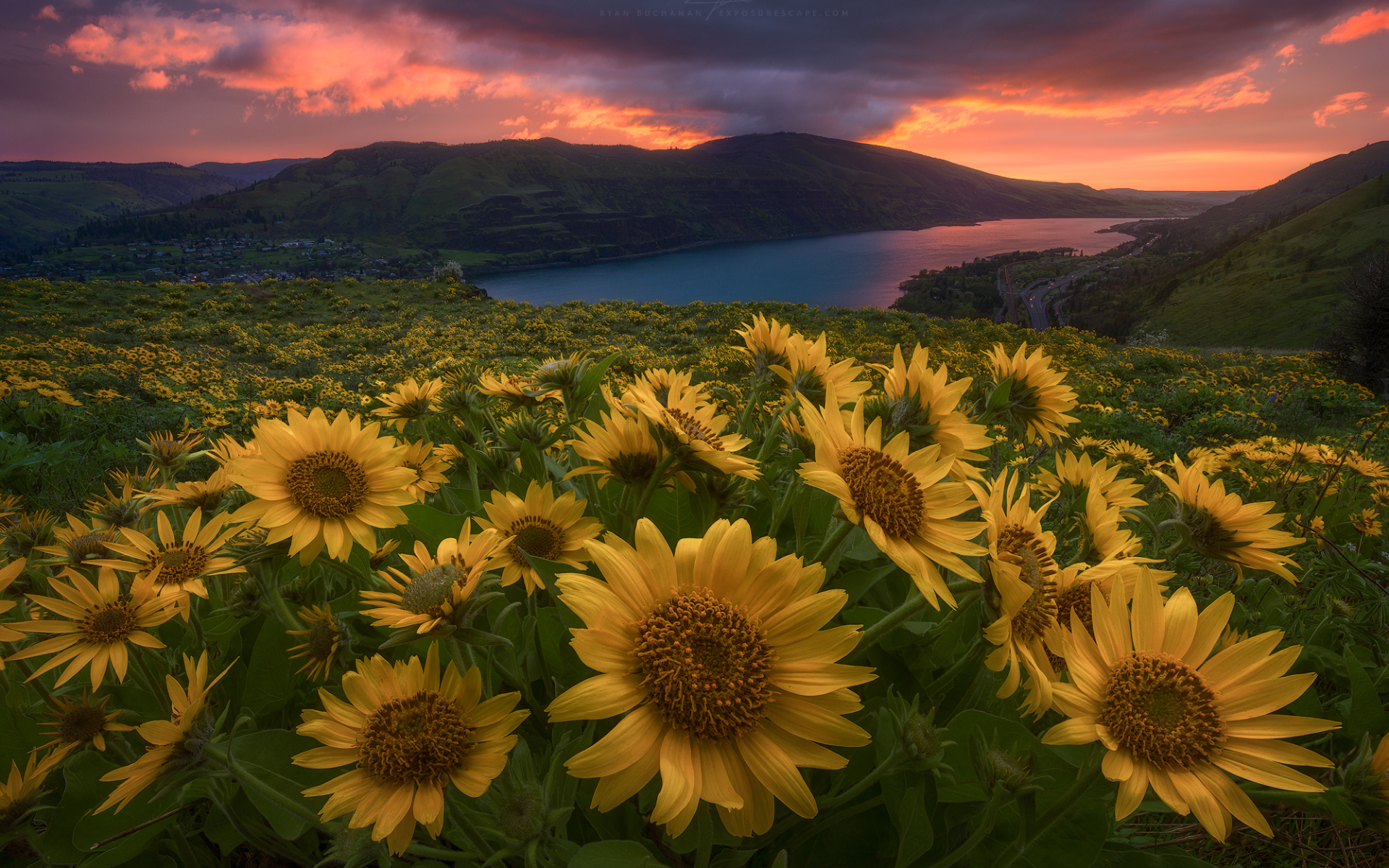 Animated Wallpaper For Tablet Perfect Sun Flowers River Dusk Wallpapers Perfect Sun
