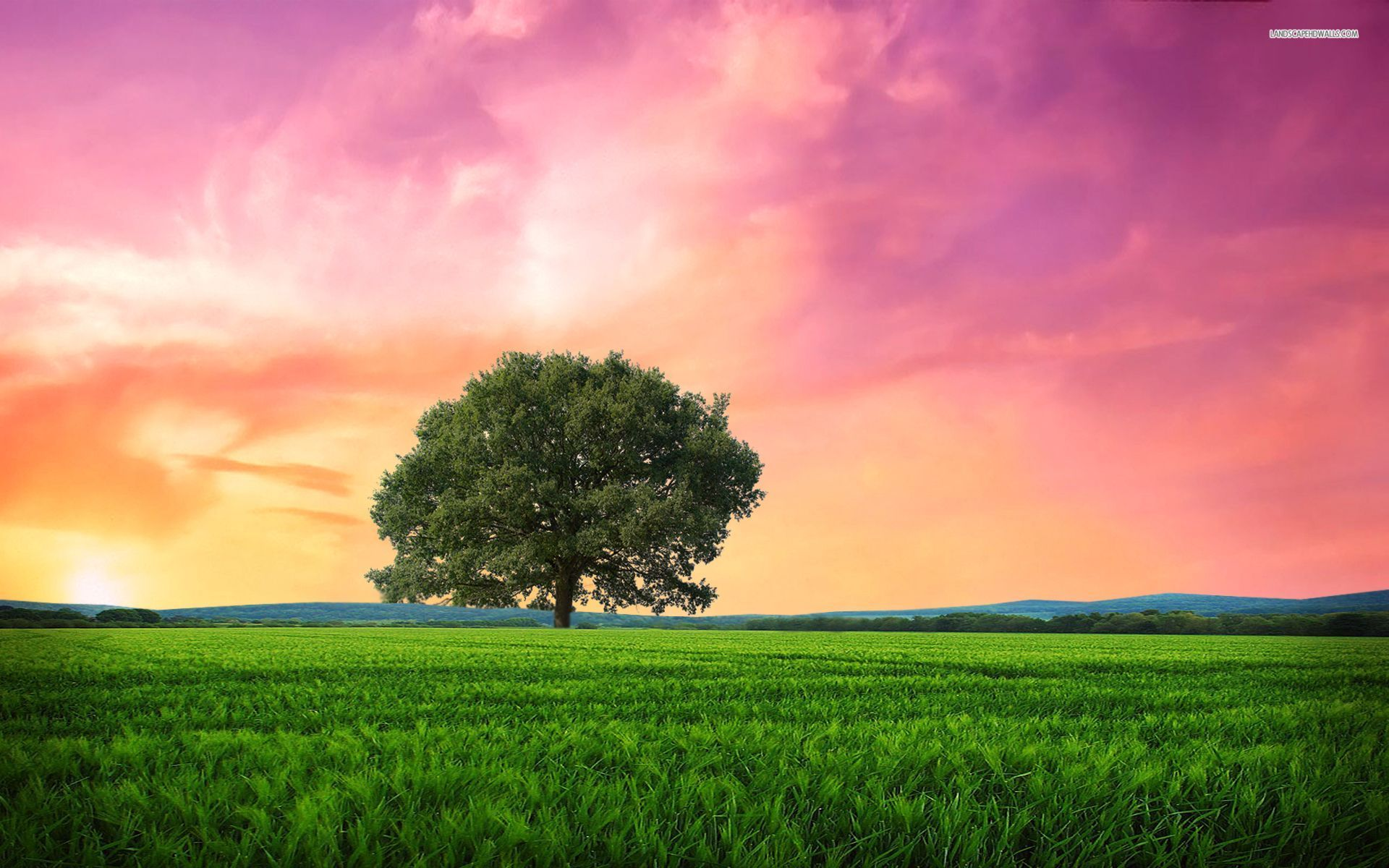 Frozen Animated Wallpaper Pink Sunrise Tree Grass Field Wallpapers Pink Sunrise