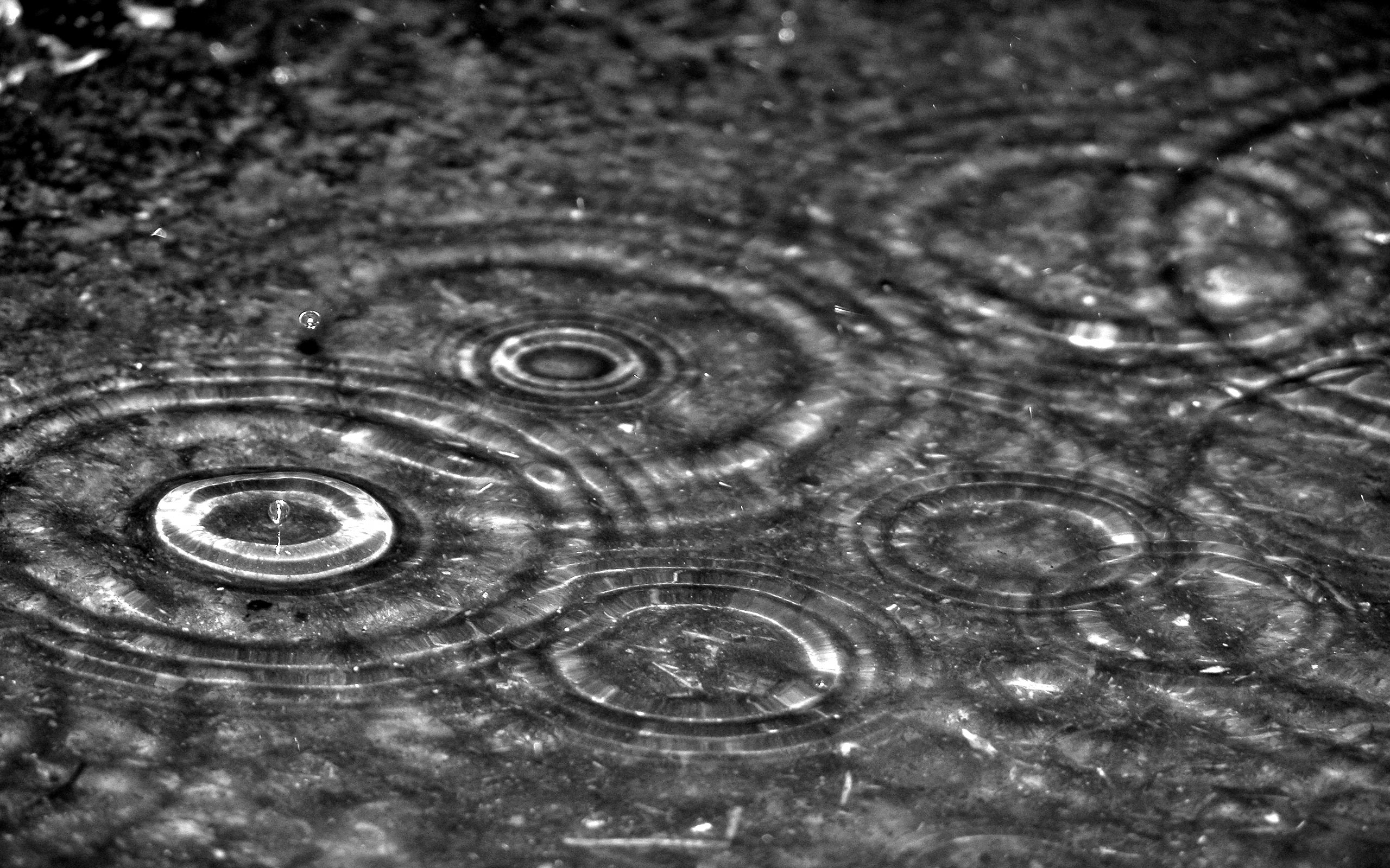 2560x1600 Rain drops desktop wallpapers and stock photos
