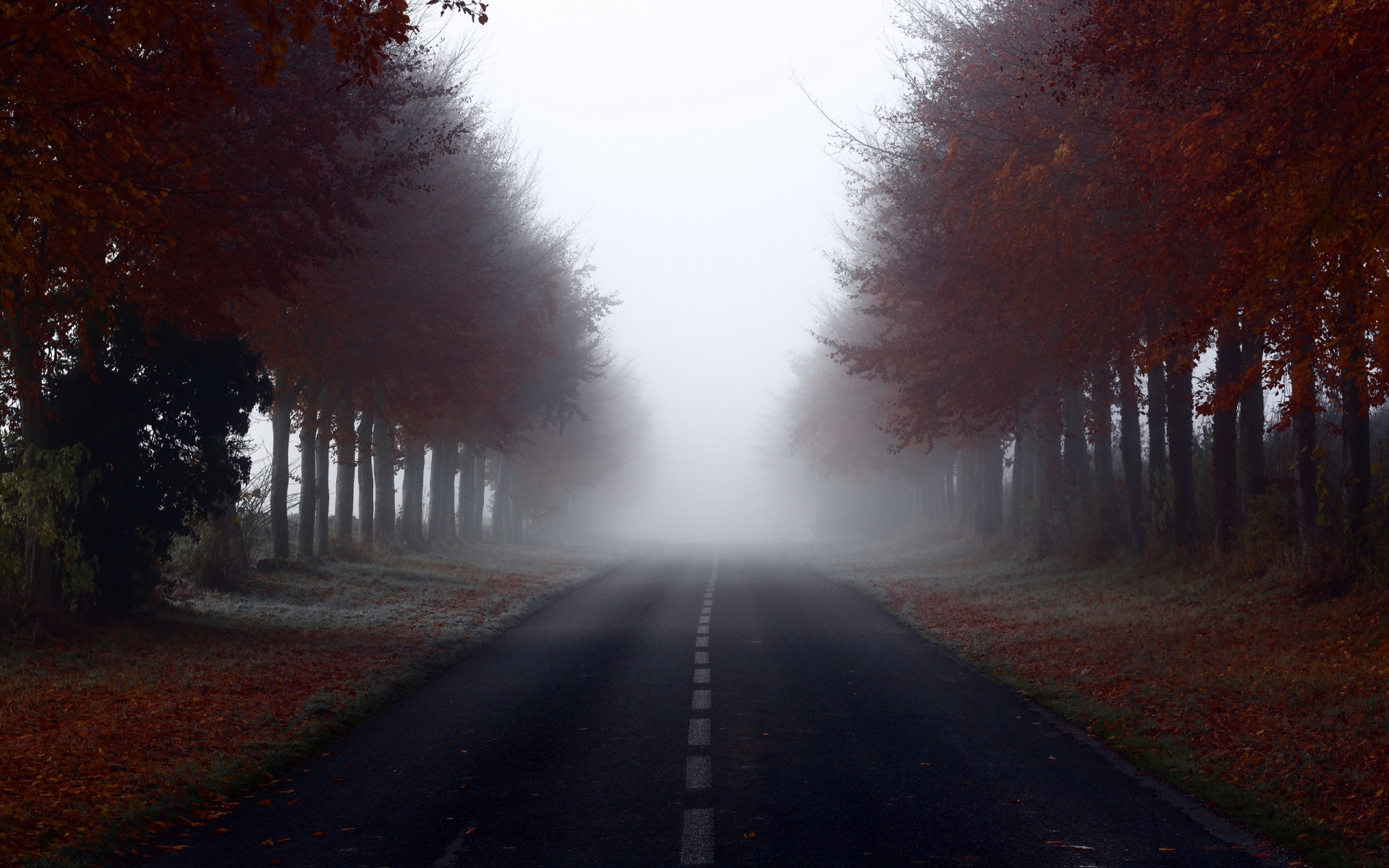 Fall Pictures For Facebook Wallpaper Red Autumn Trees Road Foggy Wallpapers Red Autumn Trees