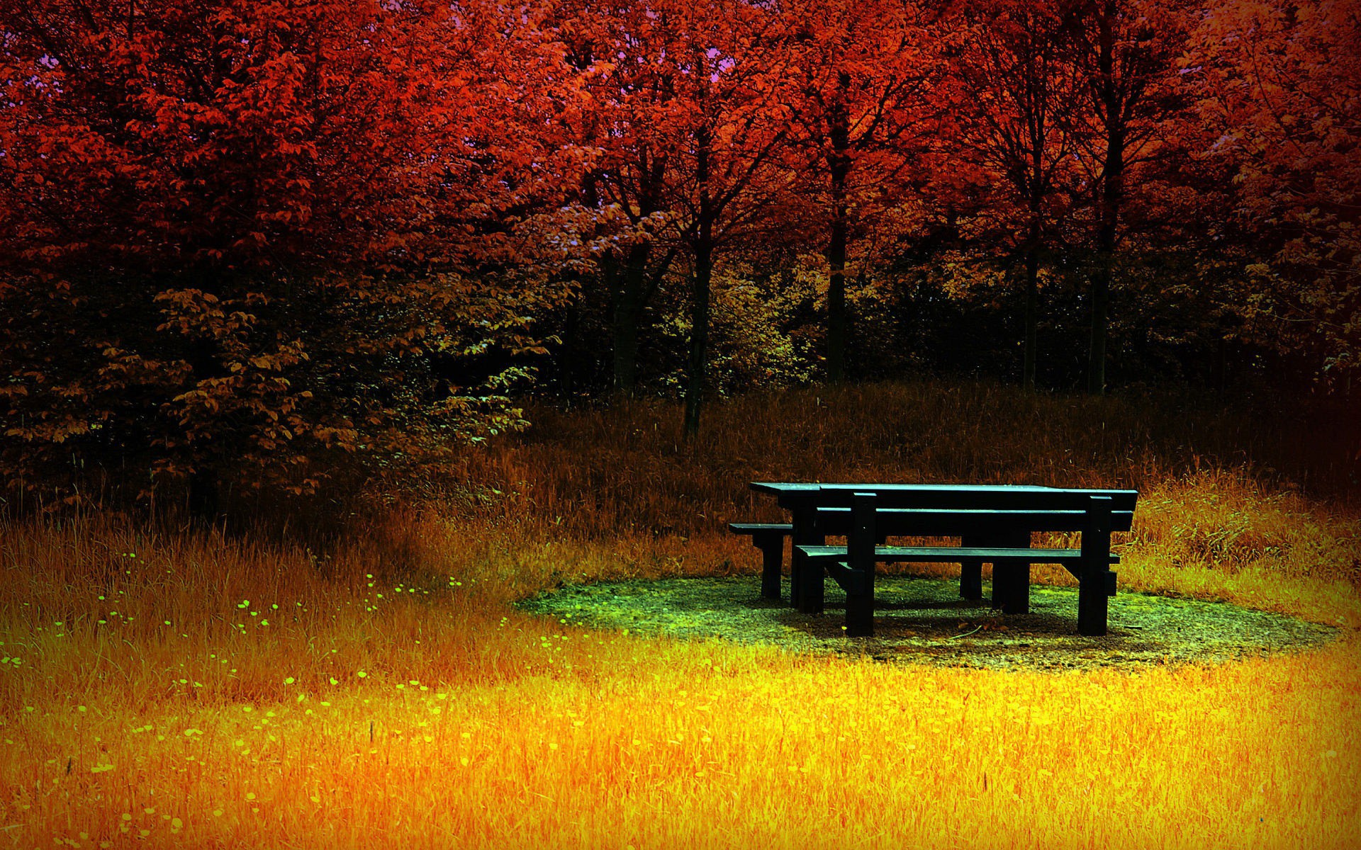 Nice Anime Wallpaper Red Forest Yellow Grass Bench Wallpapers Red Forest