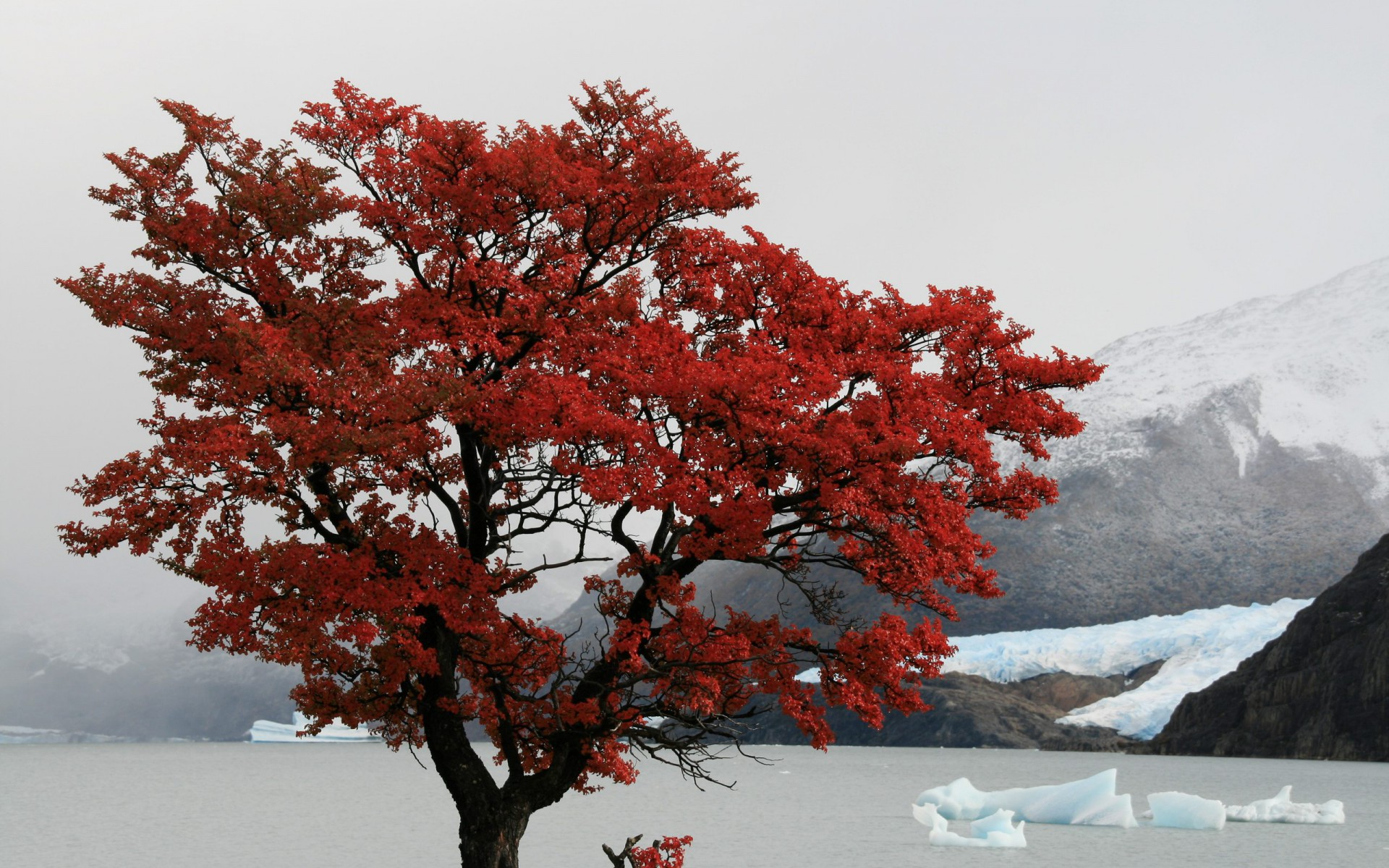 Animated Wallpaper For Tablet Red Tree Santa Cruz Province Wallpapers Red Tree Santa