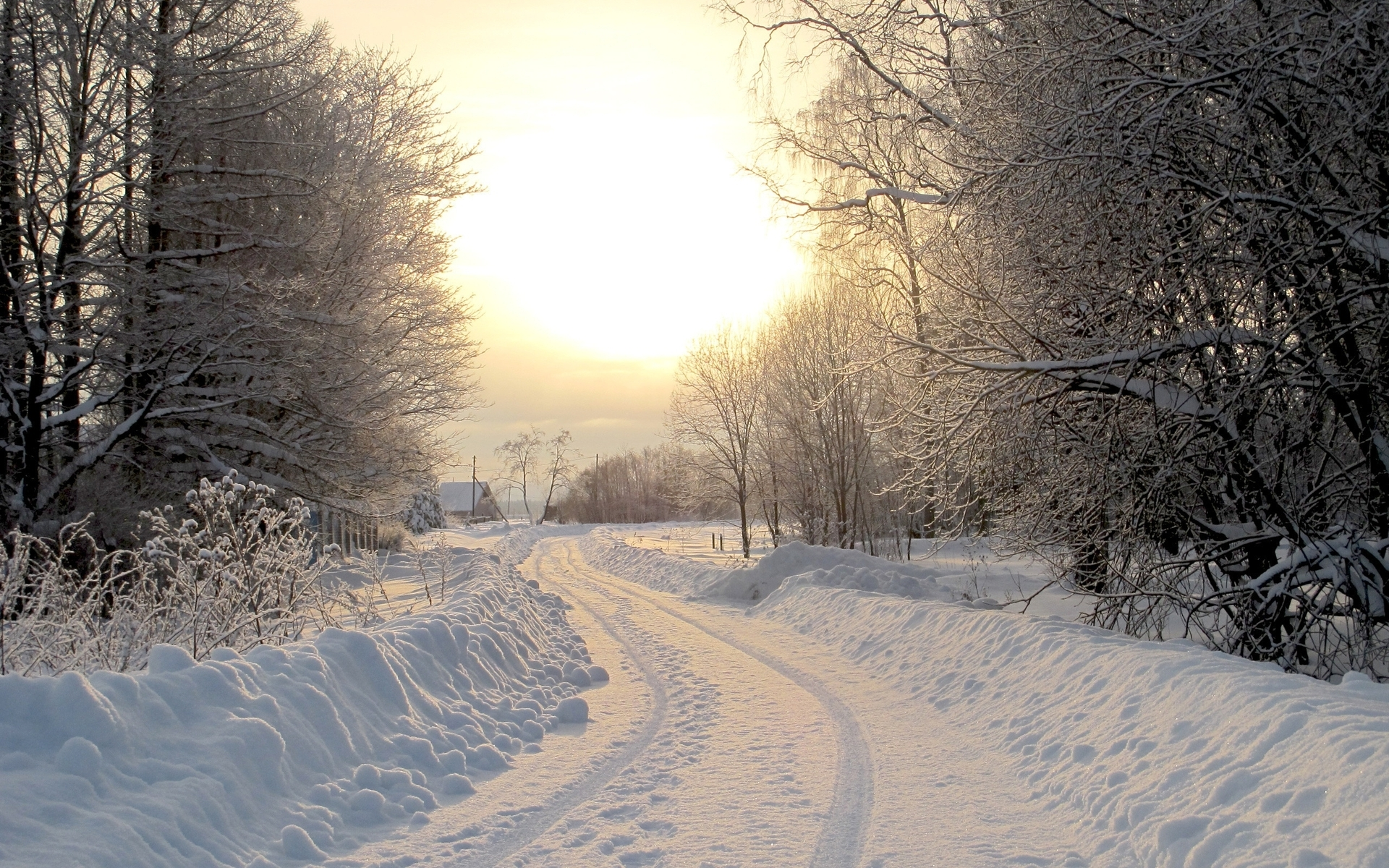 Forest Animated Wallpaper Snowy Road Trees Village Sunny Wallpapers Snowy Road