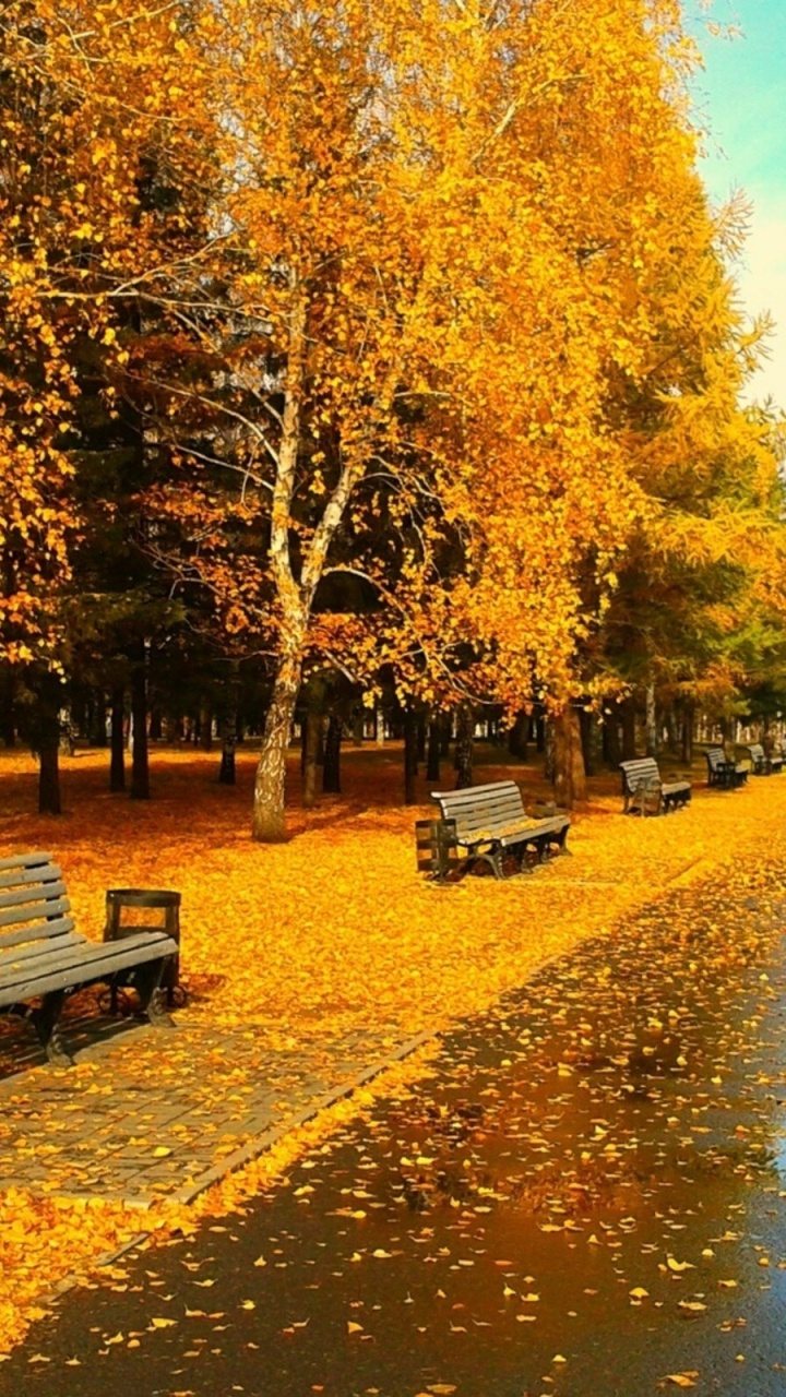 Animated Wallpapers Hd 1080p 720x1280 Sunny Autumn Day Galaxy S3 Wallpaper
