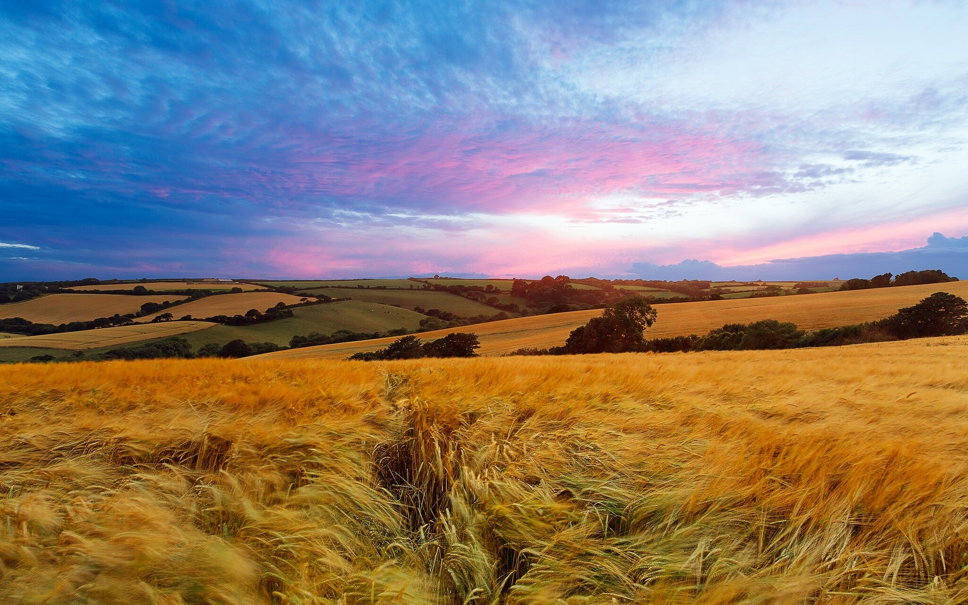 Bing Animated Wallpaper Sunset Field England Wallpapers Sunset Field England