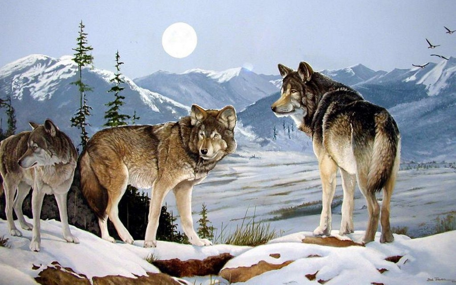 Cute Pets Wallpaper Hd Three Wolves Peaks Winter Moon Wallpapers Three Wolves