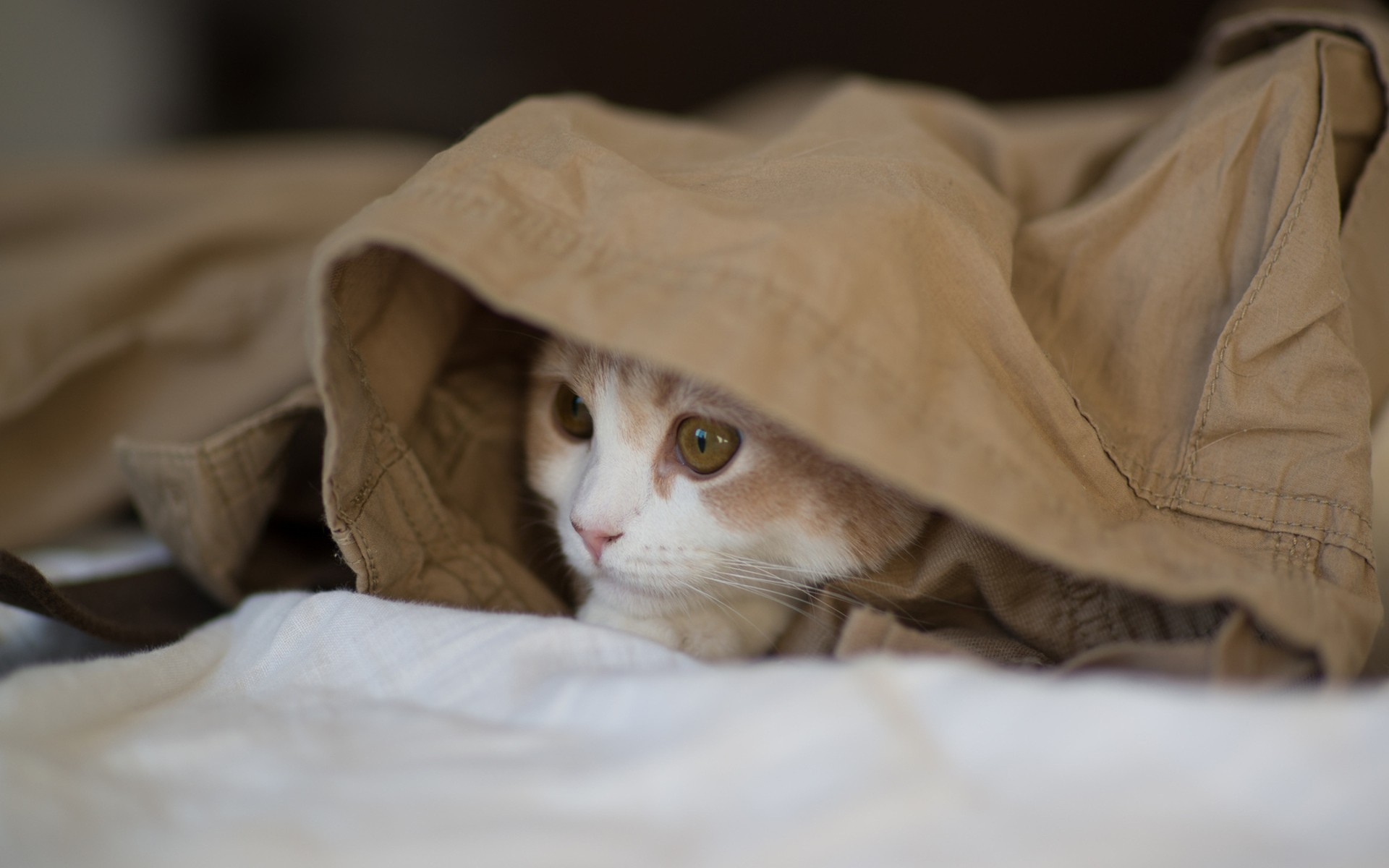 Cute Cats Wallpapers For Iphone Undercover Cat Wallpapers Undercover Cat Stock Photos