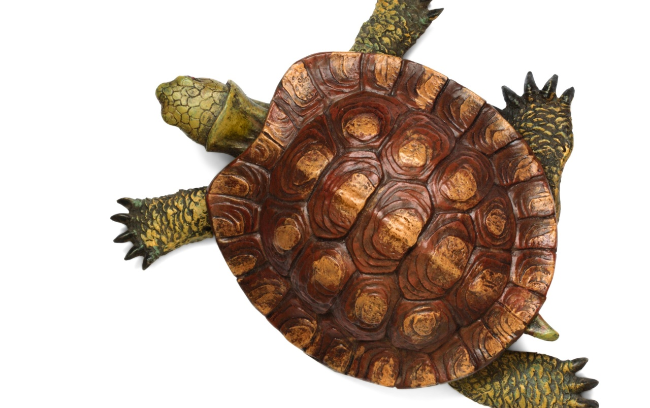 Cute Turtle Wallpaper For Iphone Turtle Top View Wallpapers Turtle Top View Stock Photos