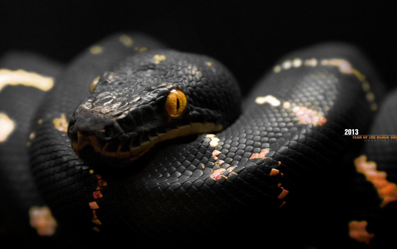 Voldemort Iphone Wallpaper 2013 Year Of The Black Snake Wallpapers 2013 Year Of The