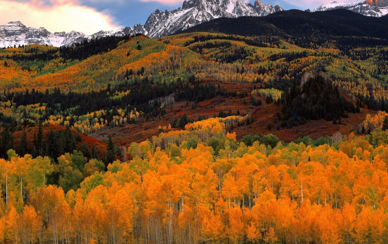 Hilly Autumn Forest Amp Mountain Wallpapers Hilly Autumn
