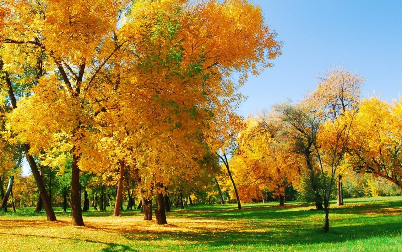 Galaxy S4 Fall Wallpaper Autumn Trees Leaves Amp Grass Wallpapers Autumn Trees
