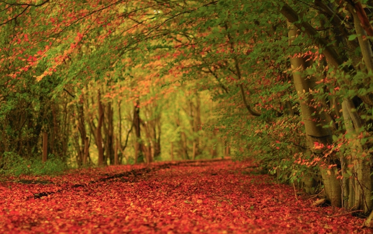 Fall Leaves Wallpaper For Ipad Autumn Leaves Red Carpet Wallpapers Autumn Leaves Red