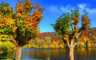 Galaxy S4 Fall Wallpaper Colorful Autumn Trees Amp River Wallpapers Colorful Autumn