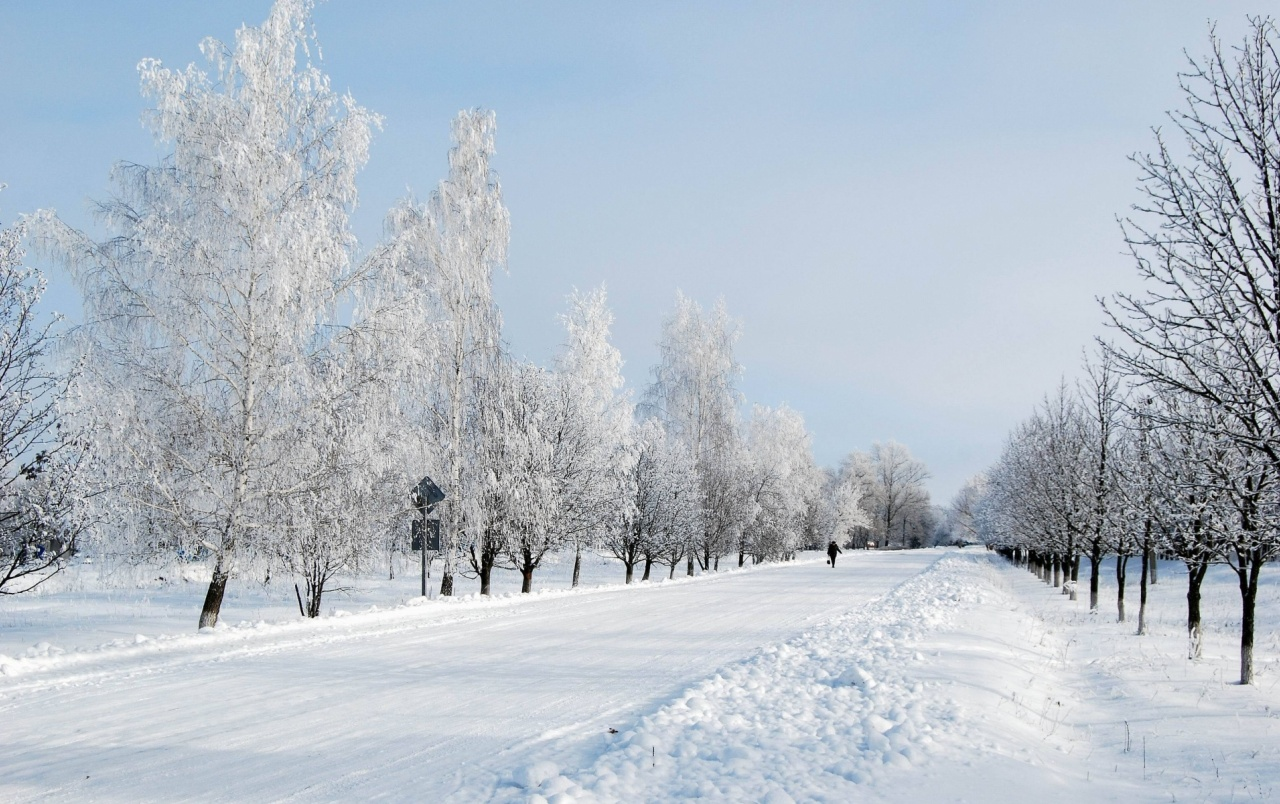 Falling Snow Live Wallpaper For Pc Long Winter Road Amp Trees Wallpapers Long Winter Road