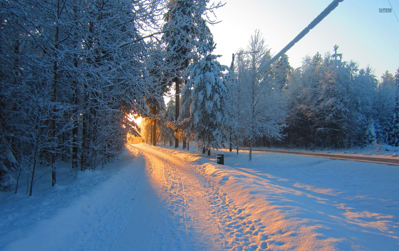 Theme Go 3d Wallpaper Winter Road Forest Morning Sun Wallpapers Winter Road