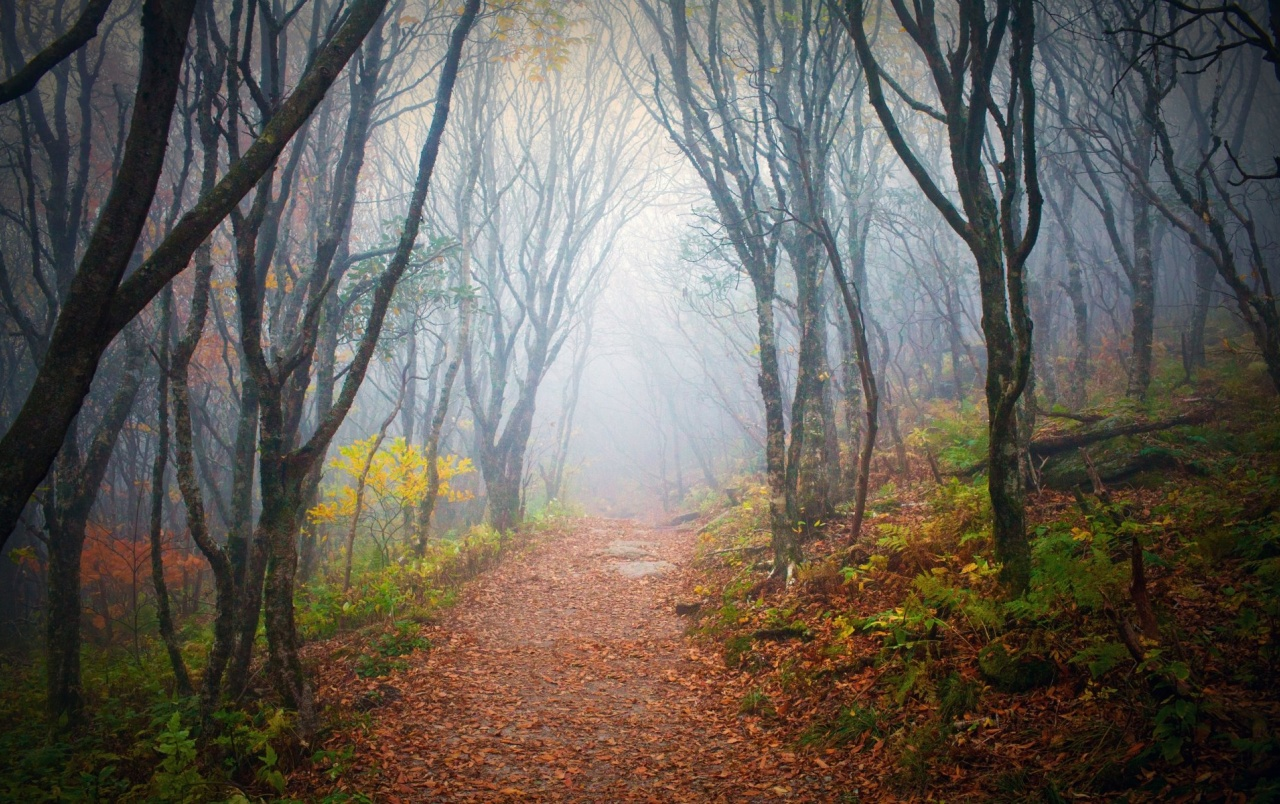 4k Fall Painting Wallpapers Forest Misty Path Leaves Plant Wallpapers Forest Misty