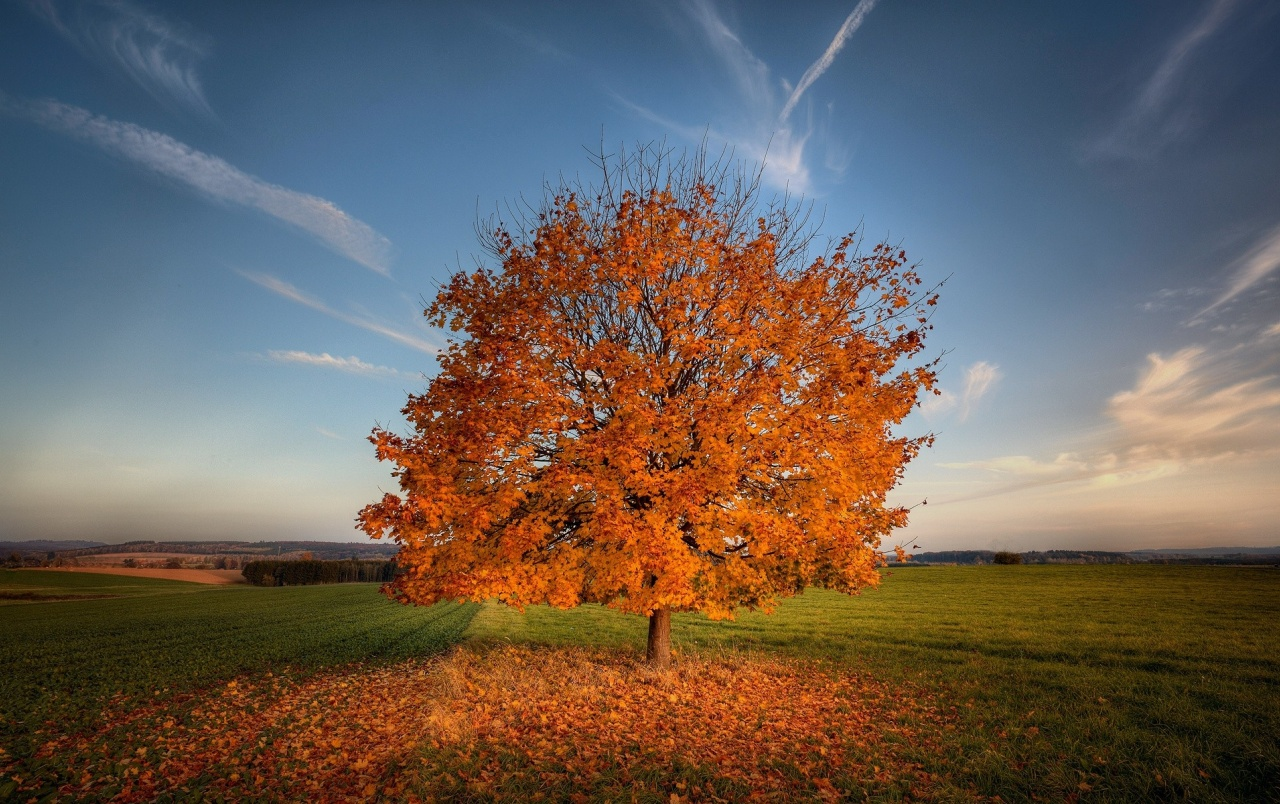 Fall Fields Wallpaper For Iphone Autumn Tree Leaves Field Sky Wallpapers Autumn Tree