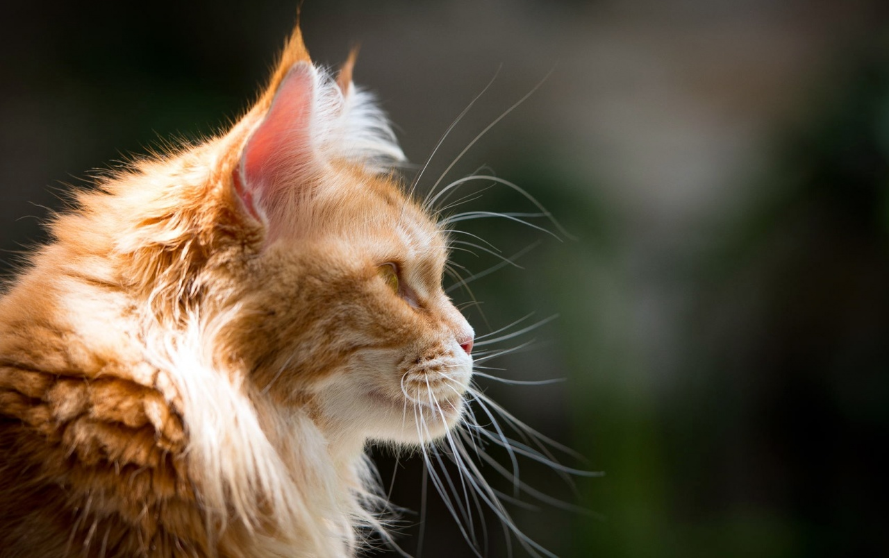 Cute Cats Wallpapers For Iphone Red Cat Profile Wallpapers Red Cat Profile Stock Photos