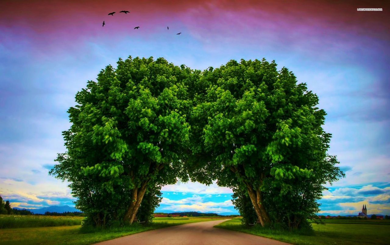 3d Optical Illusion Hd Wallpaper Lovely Tree Tunnel Wallpapers Lovely Tree Tunnel Stock