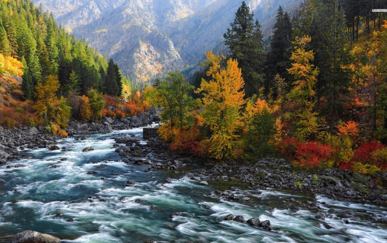 Forest Animated Wallpaper Rushing River Forest Mountains Wallpapers Rushing River