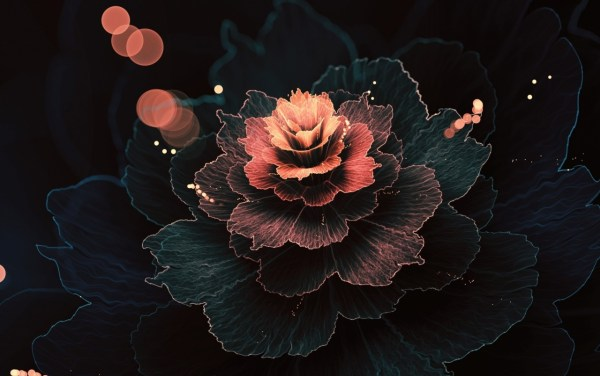 Abstract Fractal Rose Absorb Wallpapers