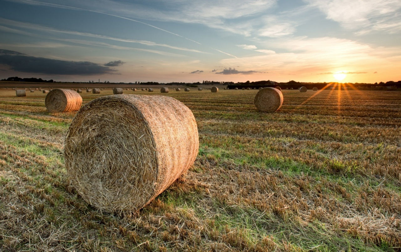 Fall Scenes For Ipad Wallpaper Hay Bales Field Trees Sunset Wallpapers Hay Bales Field