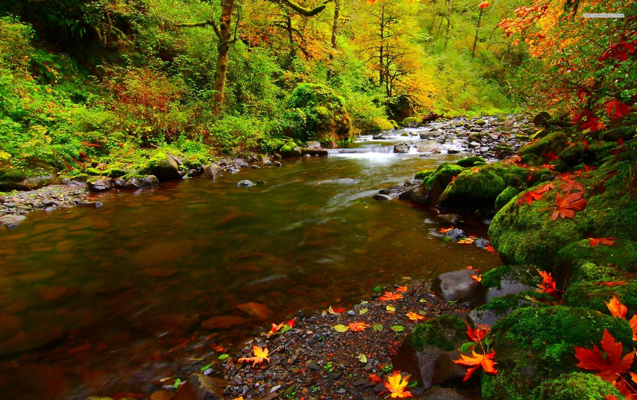 Fall Wallpapers For Tablet Forest Stream Mossy Rocks Wallpapers Forest Stream Mossy