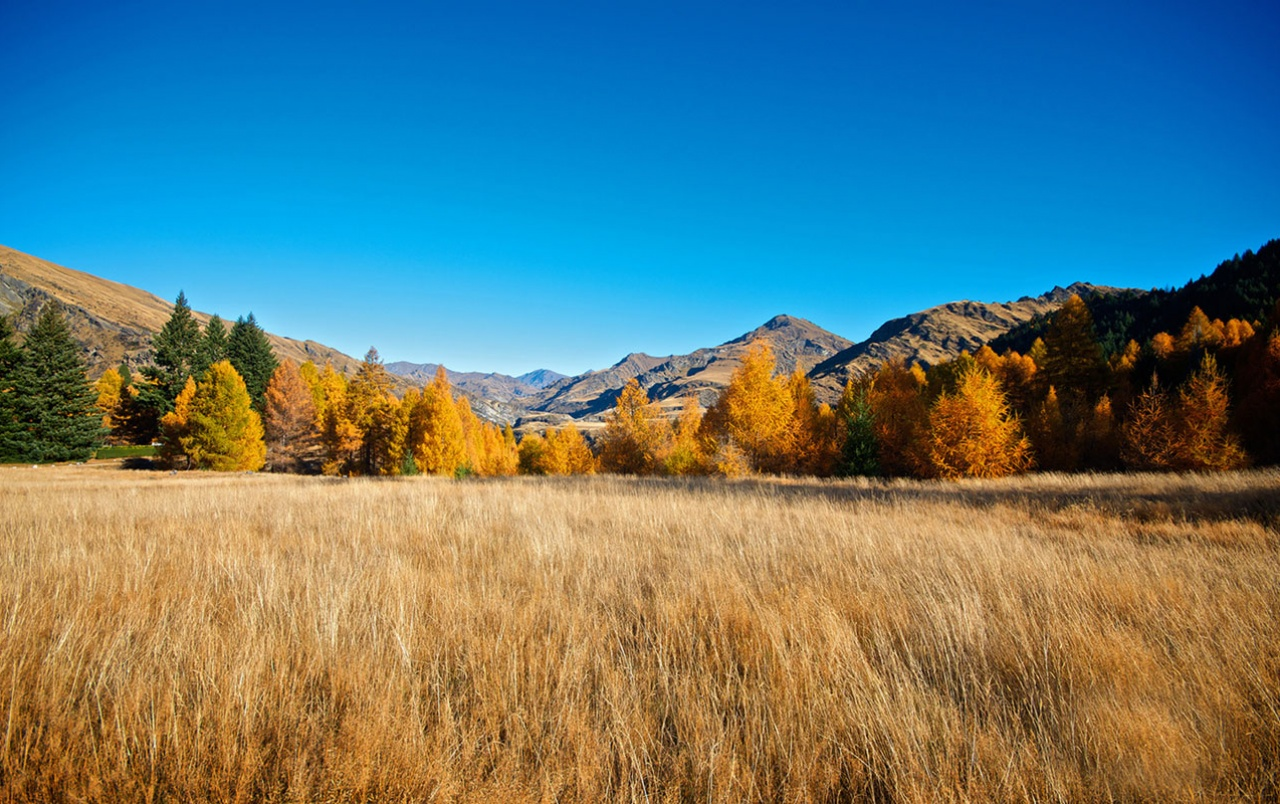 Wallpaper Fall Weather Mountains Autumn Trees Grass Wallpapers Mountains Autumn
