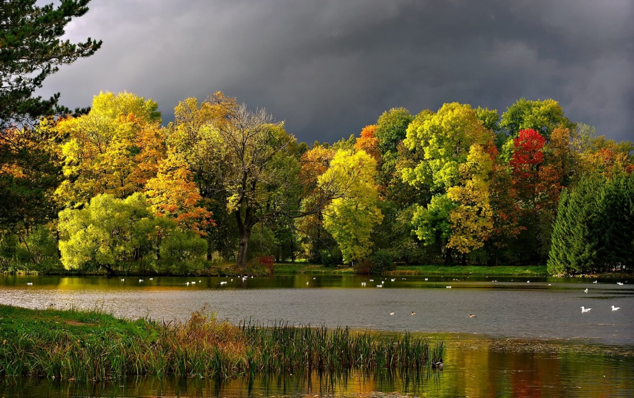3d Fall Desktop Wallpaper Autumn Trees Gray Lake Stormy Wallpapers Autumn Trees