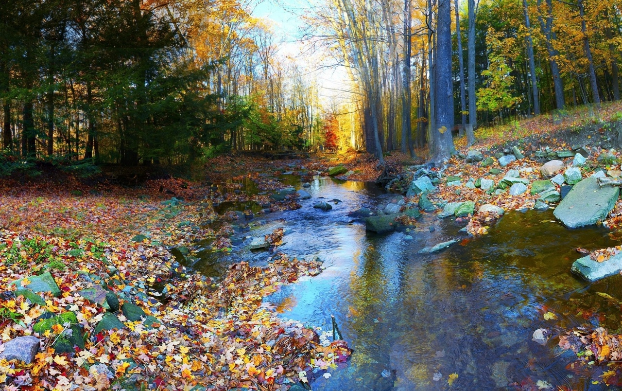 Fall Foliage Wallpaper 1920x1080 Trees Calm Stream Foliage Rock Wallpapers Trees Calm