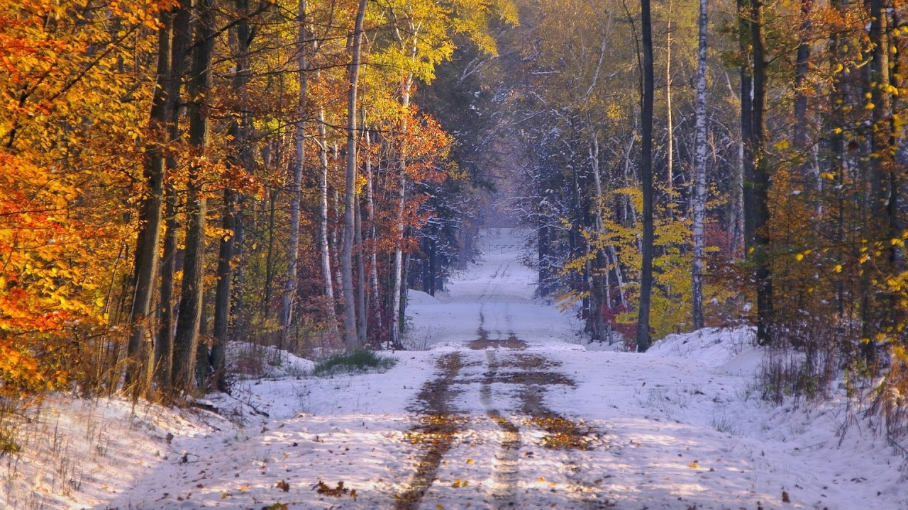 Wallpaper Scenes Of Fall Snowy Path Forest Late Autumn Wallpapers Snowy Path