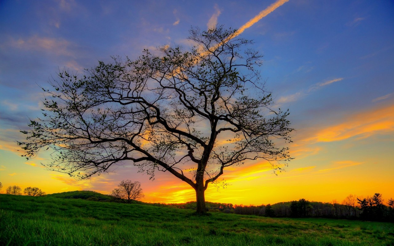 Cool Colorful Wallpapers Similar To Iphone X Nice Tree Meadow Golden Sunset Wallpapers Nice Tree