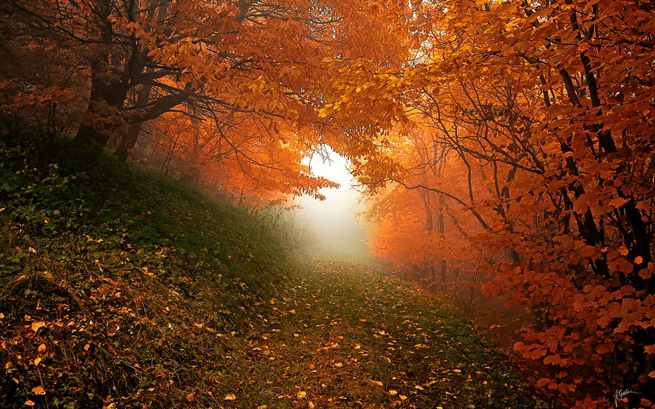 Fall Wallpaper For Tablet Orange Trees Hill Grass Foggy Wallpapers Orange Trees