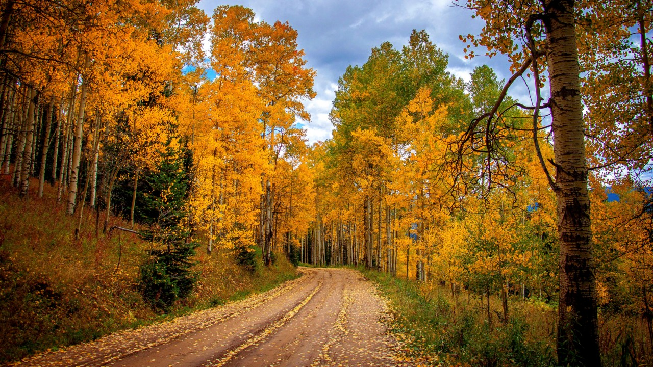 Fall Wallpapers For Tablet Birch Forest Road Sky Autumn Wallpapers Birch Forest