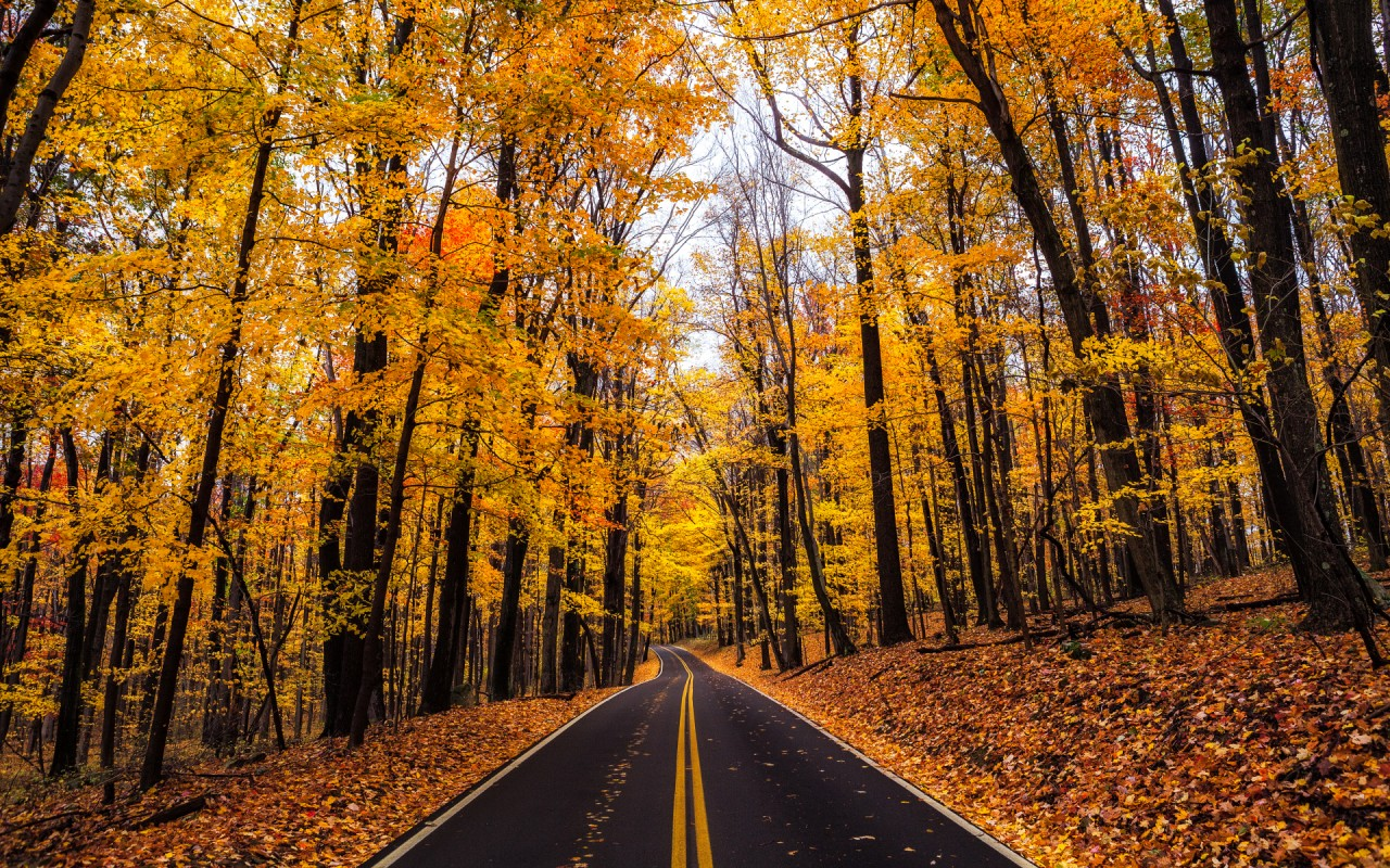 Fall Leaves Wallpaper Iphone Yellow Autumn Wood Road Leaves Wallpapers Yellow Autumn