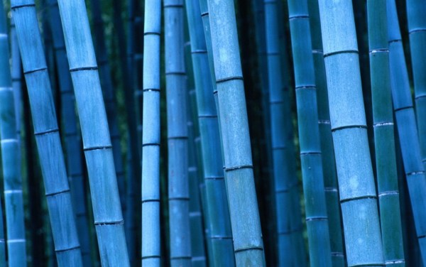 blue bamboo wallpapers